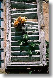 europe, flowers, italy, roses, shutters, tuscany, vertical, windows, photograph