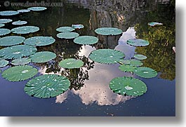 demidoff park, europe, horizontal, italy, lilly pads, pond, reflections, towns, tuscany, water, photograph