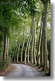 boys, childrens, demidoff park, europe, italy, jacks, roads, streets, toddlers, towns, trees, tuscany, vertical, photograph