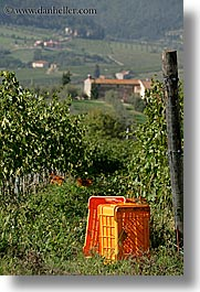 crates, europe, fattoria lavacchio, grapes, italy, towns, tuscany, vertical, vineyards, photograph