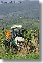 europe, fattoria lavacchio, grapes, italy, pickers, towns, tuscany, vertical, photograph