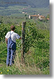 europe, fattoria lavacchio, grape vines, grapes, italy, men, pickers, towns, tuscany, vertical, photograph