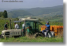 europe, fattoria lavacchio, grapes, horizontal, italy, men, pickers, towns, trucks, tuscany, photograph