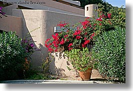 bougainvilleas, buildings, europe, flowers, horizontal, houses, isola giglio, italy, towns, tuscany, photograph