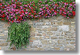 europe, flowers, horizontal, italy, montalcino, stones, towns, tuscany, walls, photograph
