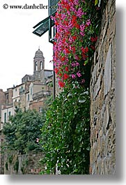 bell towers, europe, flowers, italy, montalcino, stones, towns, tuscany, vertical, walls, photograph