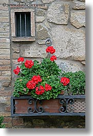 europe, flowers, geraniums, italy, montalcino, stones, towns, tuscany, vertical, walls, windows, photograph