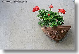 europe, flowers, geraniums, horizontal, italy, montalcino, towns, tuscany, photograph