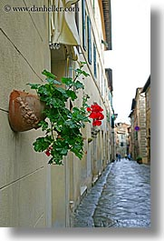 cobblestones, europe, flowers, geraniums, italy, montalcino, towns, tuscany, vertical, photograph