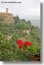 bell towers, europe, flowers, geraniums, italy, montalcino, towns, tuscany, vertical, photograph