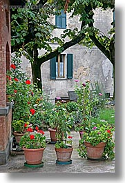 europe, flowers, gardens, geraniums, italy, montalcino, potted, towns, tuscany, vertical, photograph