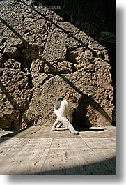cats, europe, italy, pitigliano, shadows, towns, tuscany, vertical, photograph