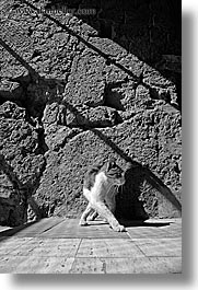 black and white, cats, europe, italy, pitigliano, shadows, towns, tuscany, vertical, photograph