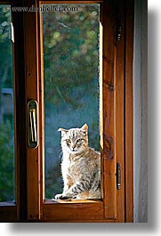 cats, europe, italy, poderi di coiano, towns, tuscany, vertical, windows, photograph