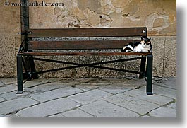 benches, cats, europe, horizontal, italy, populonia, towns, tuscany, photograph