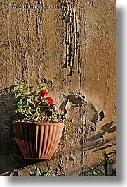 europe, flowers, geraniums, italy, populonia, potted, towns, tuscany, vertical, walls, photograph