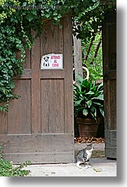 beware of dog, cats, doors, europe, italy, ivy, san quirico, signs, towns, tuscany, vertical, photograph