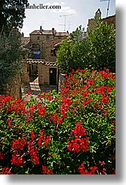 europe, flowers, houses, italy, san quirico, towns, tuscany, vertical, photograph