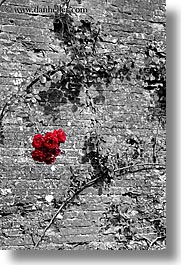 abstracts, bricks, europe, flowers, italy, red, roses, scarperia, stones, towns, tuscany, vertical, photograph