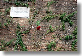 bricks, europe, flowers, horizontal, italy, red, roses, scarperia, stones, towns, tuscany, photograph