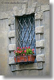 europe, flowers, geraniums, irons, italy, siena, towns, tuscany, vertical, windows, photograph
