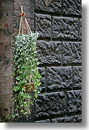 europe, hangings, italy, plants, siena, stones, towns, tuscany, vertical, photograph