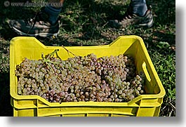 crates, europe, fruits, grapes, horizontal, italy, tuscany, white grapes, wineries, photograph