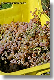 crates, europe, fruits, grapes, italy, tuscany, vertical, white grapes, wineries, photograph