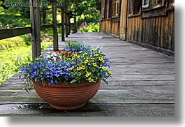 colored, deck, europe, flowers, horizontal, poland, woods, photograph