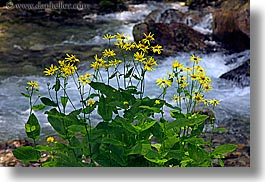 colors, europe, flowers, green, horizontal, poland, rivers, yellow, photograph
