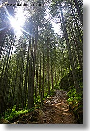 colors, europe, forests, green, lush, nature, paths, poland, sky, sun, vertical, photograph