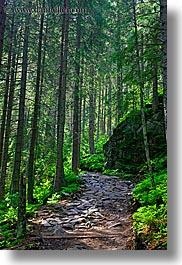 colors, europe, forests, green, lush, nature, paths, poland, vertical, photograph