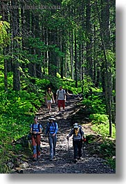 activities, europe, forests, hikers, hiking, nature, paths, people, plants, poland, trees, vertical, woods, photograph