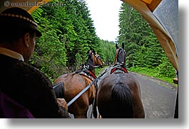 driving, europe, horizontal, horses, nature, plants, poland, trees, photograph