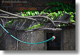 blues, branches, europe, horizontal, hose, ivy, krakow, poland, photograph