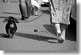 animals, black and white, dachsund, dogs, europe, horizontal, krakow, poland, walking, womens, photograph
