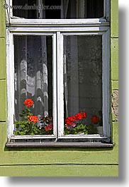 colors, europe, flowers, green, krakow, poland, red, vertical, windows, photograph