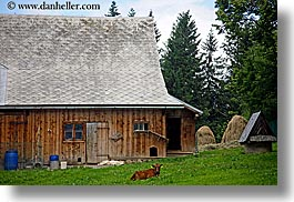 barn, buildings, cows, europe, grass, horizontal, lying, poland, zakopane, photograph