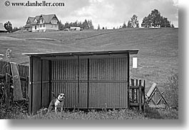 barking, black and white, dogs, europe, horizontal, poland, zakopane, photograph