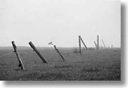 england, europe, fences, fog, horizontal, scotland, united kingdom, photograph