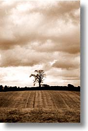 england, europe, lone, scotland, trees, united kingdom, vertical, photograph