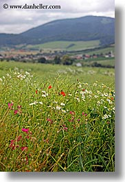 colorful, europe, fields, flowers, slovakia, vertical, wildflowers, photograph