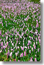 europe, fields, flowers, pink, purple, slovakia, vertical, photograph