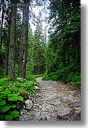colors, europe, forests, green, materials, nature, paths, plants, rockies, slovakia, stones, trees, vertical, photograph