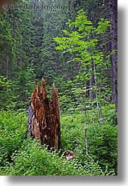 colors, europe, forests, green, growth, nature, plants, slovakia, stumps, trees, vertical, photograph