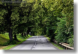 colors, europe, green, horizontal, lined, roads, slovakia, streets, trees, photograph
