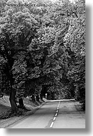 black and white, europe, lined, nature, plants, roads, slovakia, streets, tree tunnel, trees, vertical, photograph