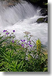 europe, flowers, flowing, motion blur, rivers, slovakia, vertical, water, photograph