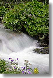europe, flowers, flowing, motion blur, rivers, slovakia, slow exposure, vertical, water, photograph