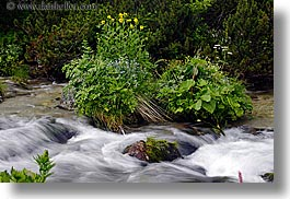 europe, flowers, flowing, horizontal, motion blur, rivers, slovakia, water, photograph